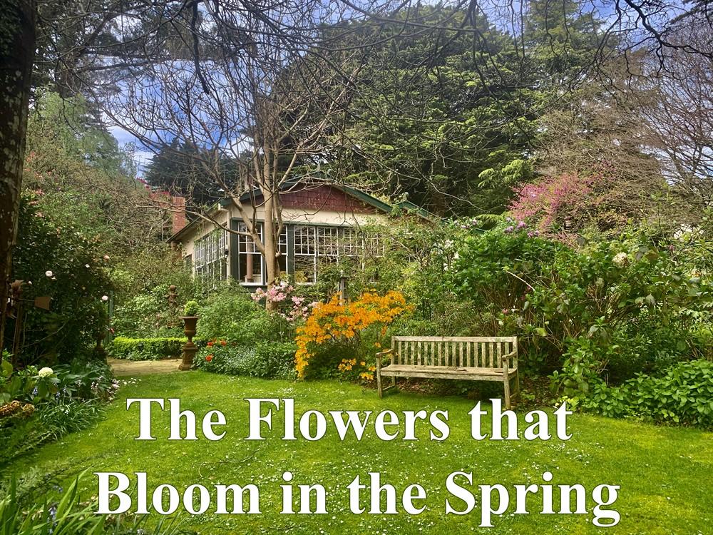 The Flowers that Bloom in the Spring - Season 2021 ~ Gilbert & Sullivan Opera Victoria