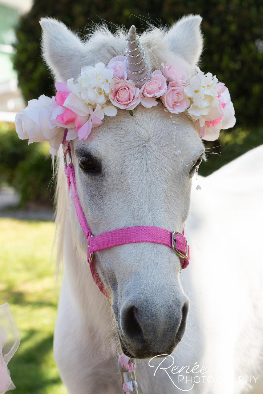Our Royal Unicorn Ruby